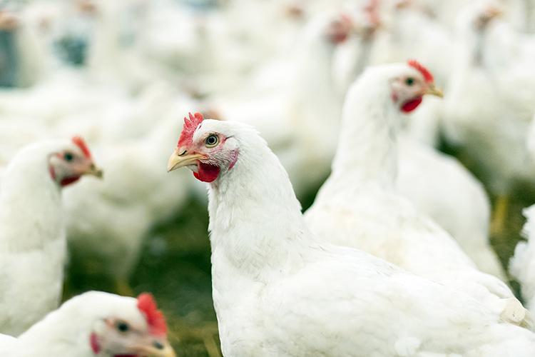 Reglamento de la ley federal de sanidad animal